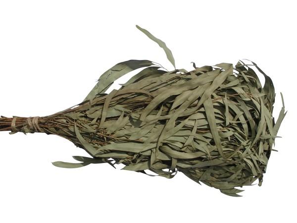 Eukalyptusreisig, getrocknet 5 Stück
